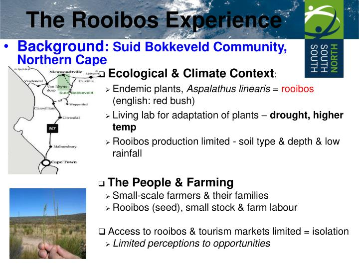 The rooibos experience