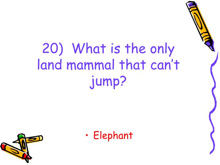 20)  What is the only land mammal that can't jump?