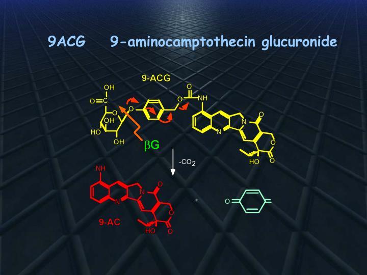 9ACG    9-aminocamptothecin glucuronide