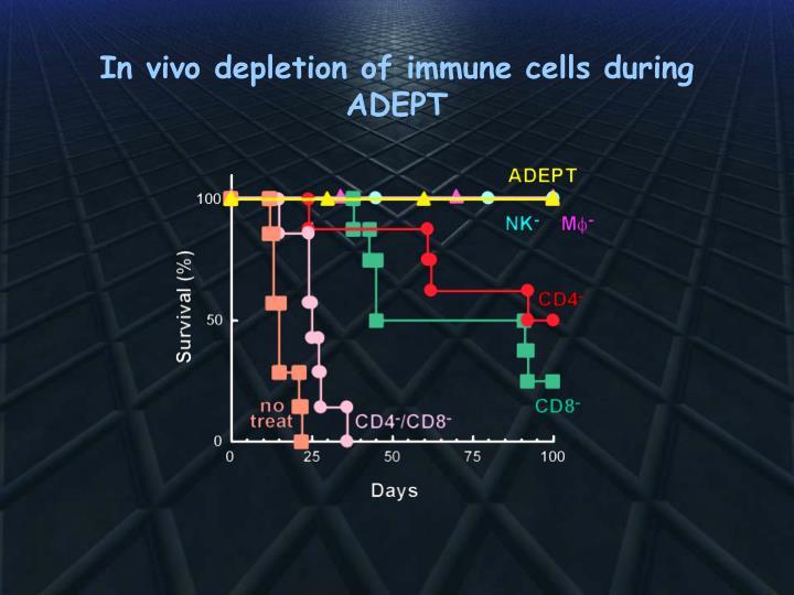 In vivo depletion of immune cells during ADEPT