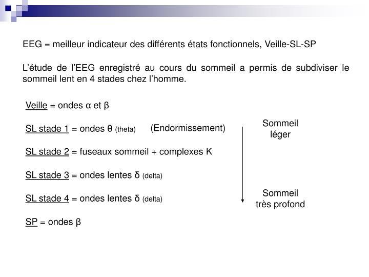 EEG = meilleur indicateur des différents états fonctionnels, Veille-SL-SP