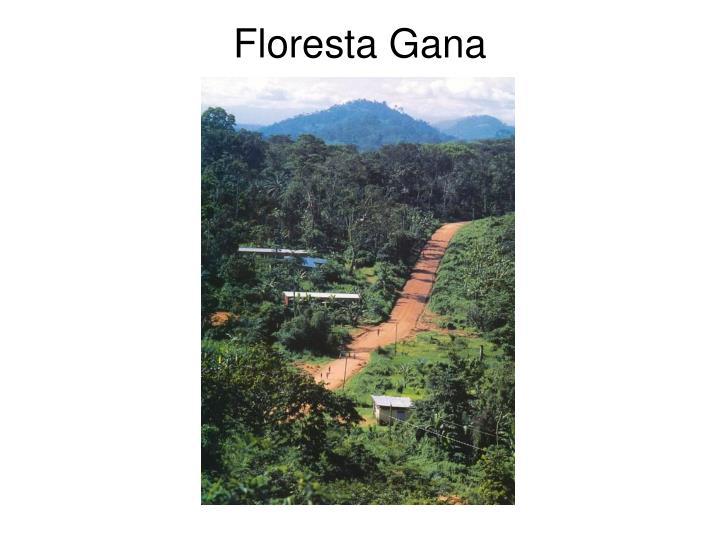 Floresta Gana