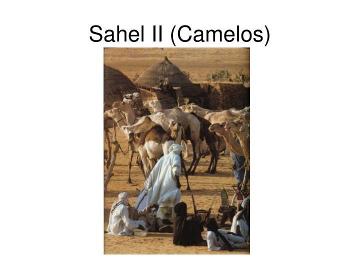 Sahel II (Camelos)