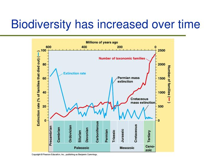 Biodiversity has increased over time