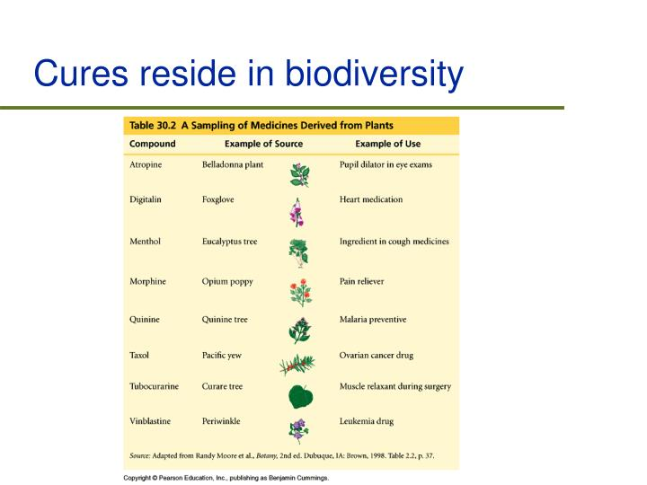 Cures reside in biodiversity