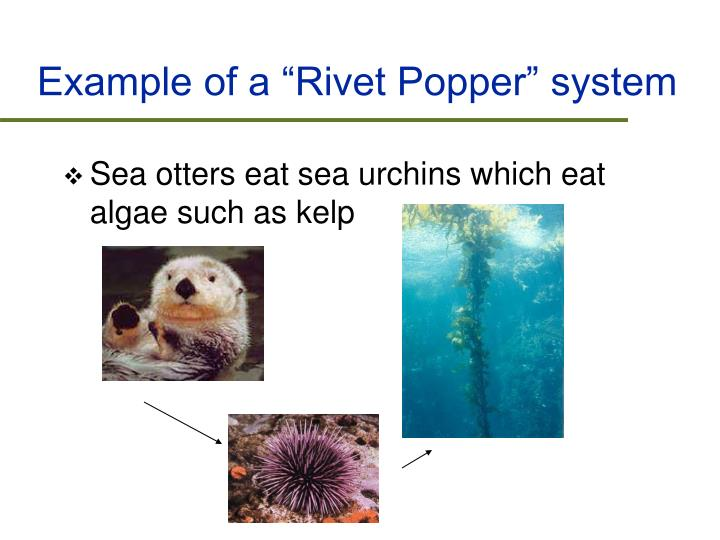 """Example of a """"Rivet Popper"""" system"""