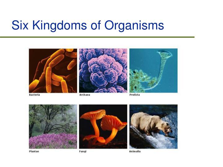 Six Kingdoms of Organisms