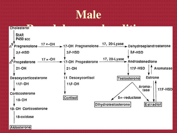 Male Pseudohermaphroditism