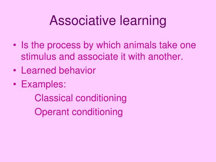 Ppt Animal Behavior Powerpoint Presentation Id1108636