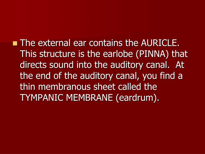 The external ear contains the AURICLE.  This structure is the earlobe (PINNA) that directs sound into the auditory canal.  At the end of the auditory canal, you find a thin membranous sheet called the TYMPANIC MEMBRANE (eardrum).