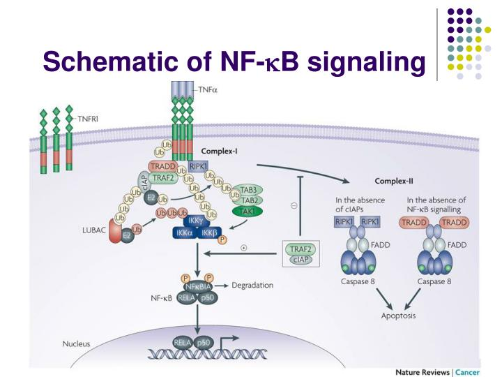 Schematic of NF-