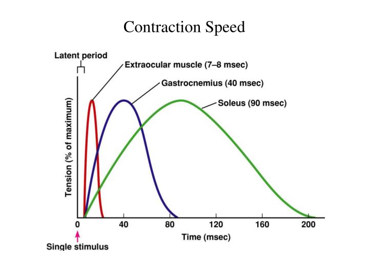 Contraction Speed