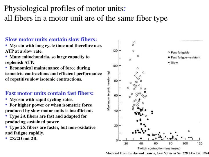 Physiological profiles of motor units