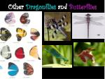 other dragonflies and butterflies