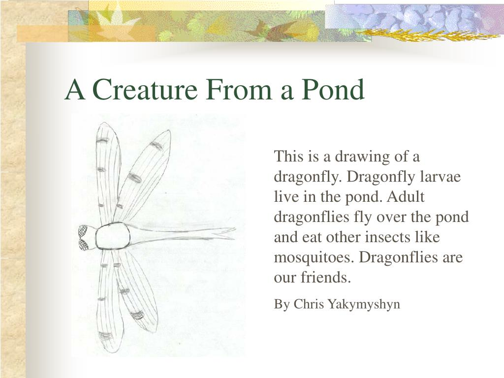 A Creature From a Pond