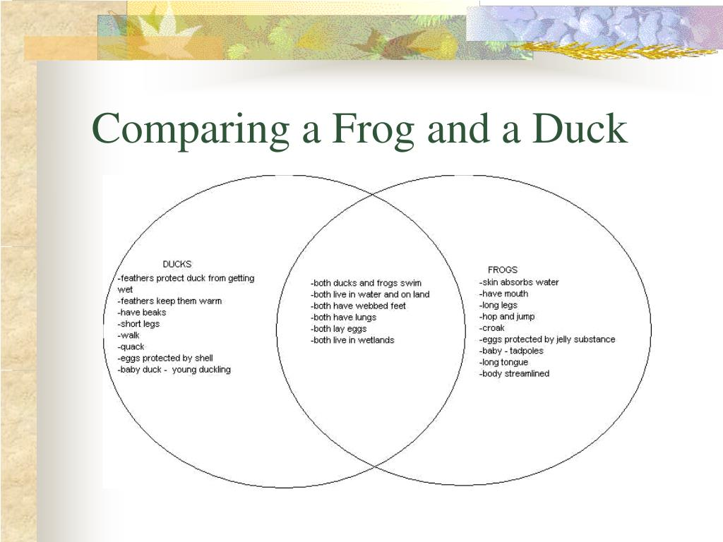 Comparing a Frog and a Duck