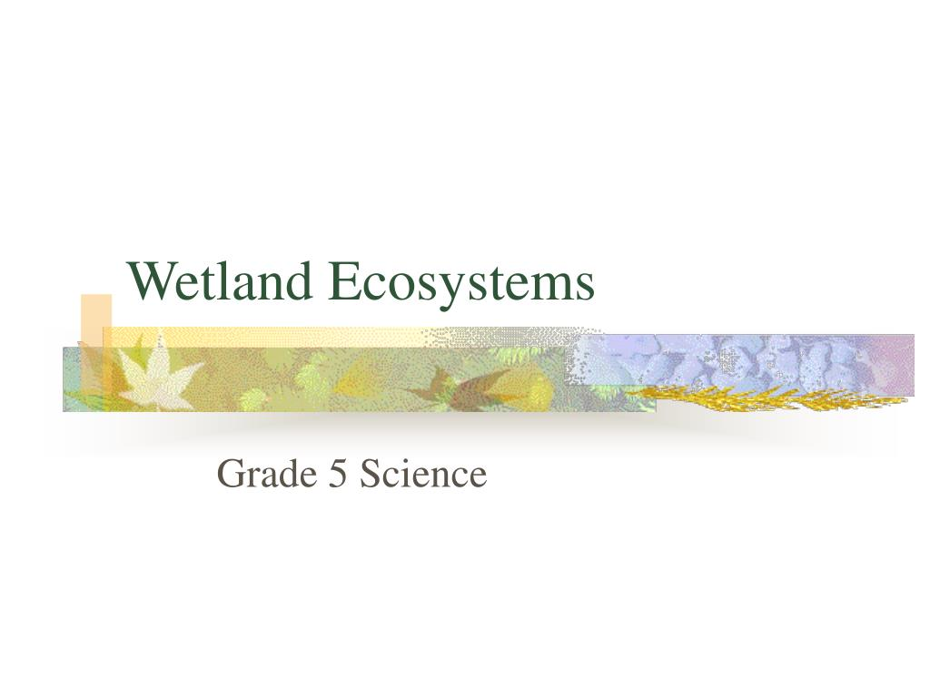 wetland ecosystems l.