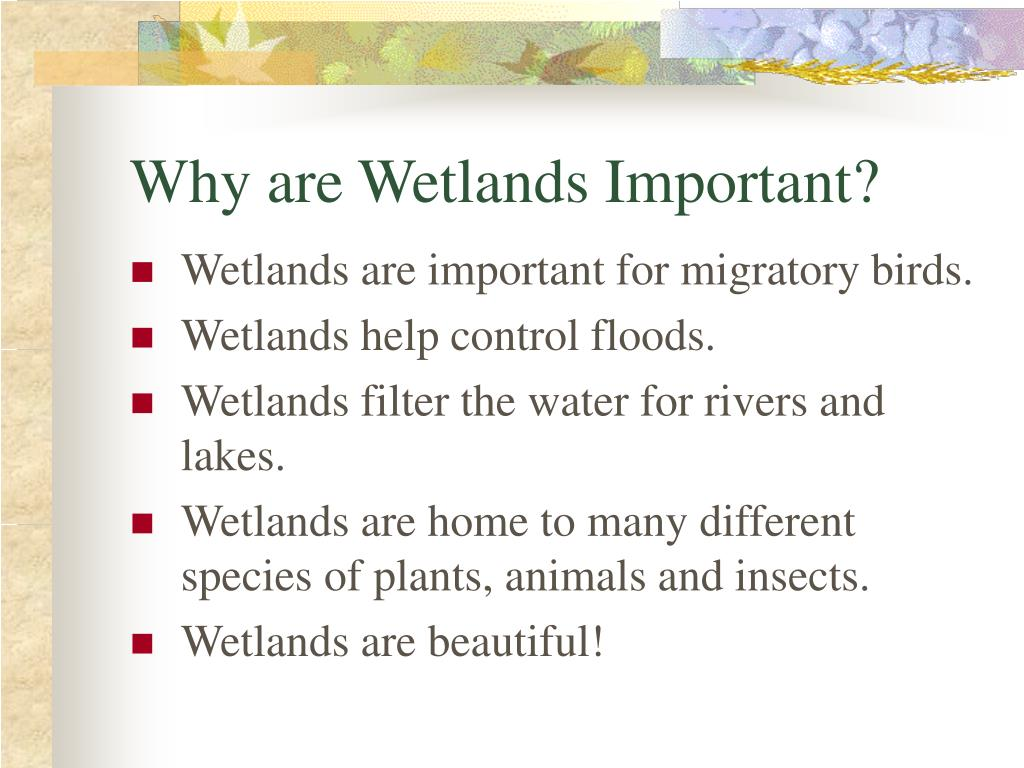 Why are Wetlands Important?