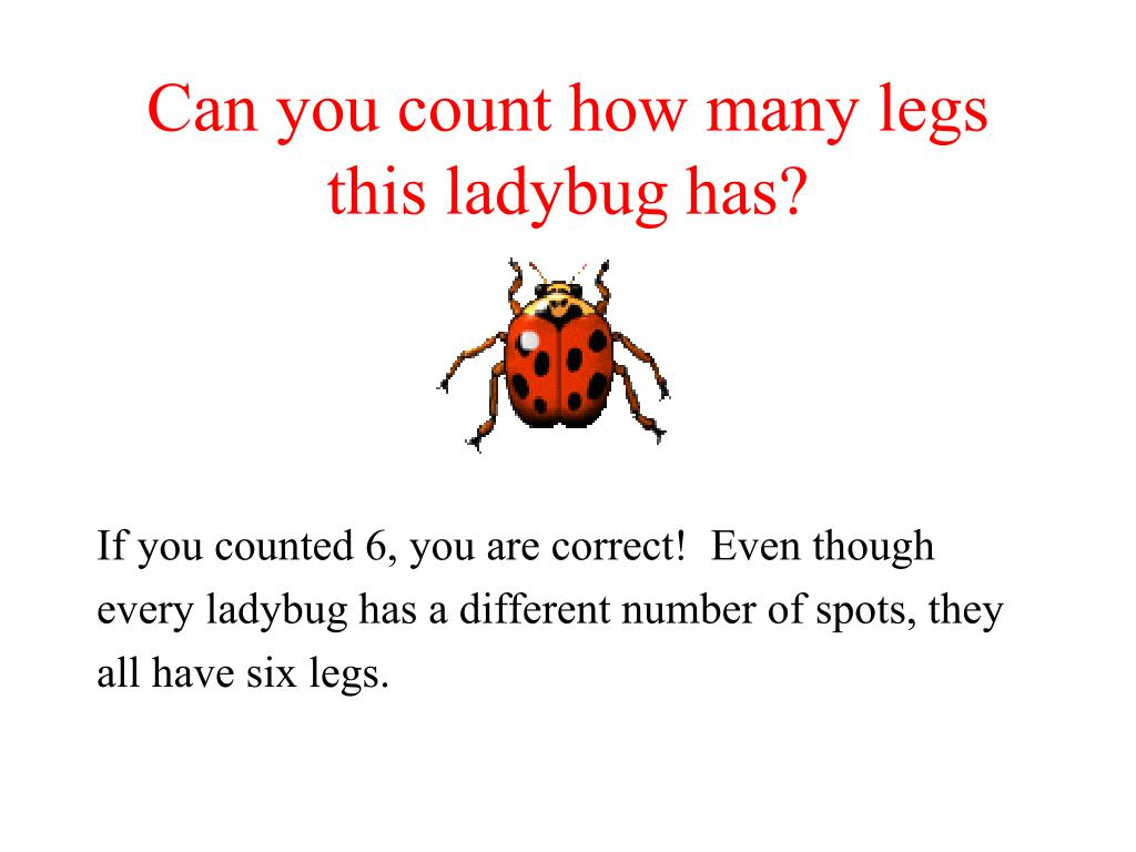 Can you count how many legs this ladybug has?