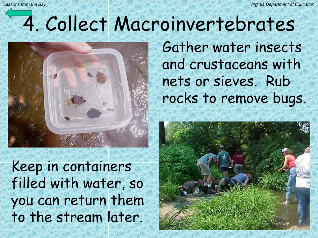 4. Collect Macroinvertebrates