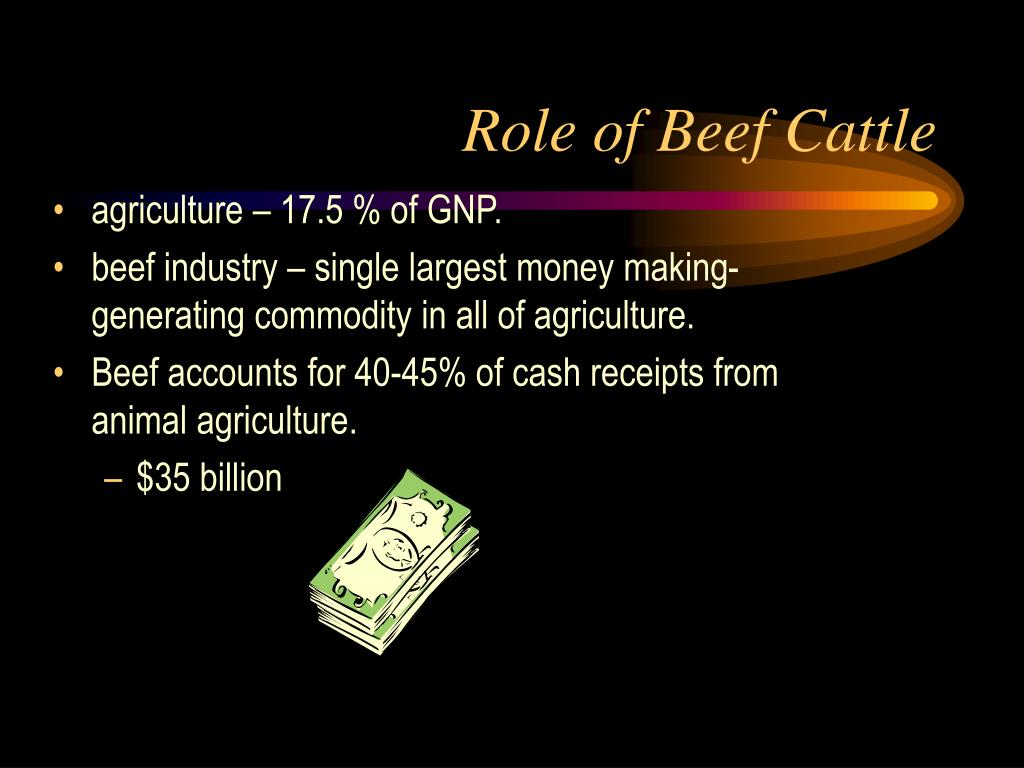 role of beef cattle l.