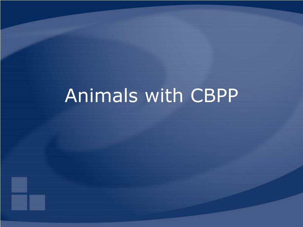 Animals with CBPP