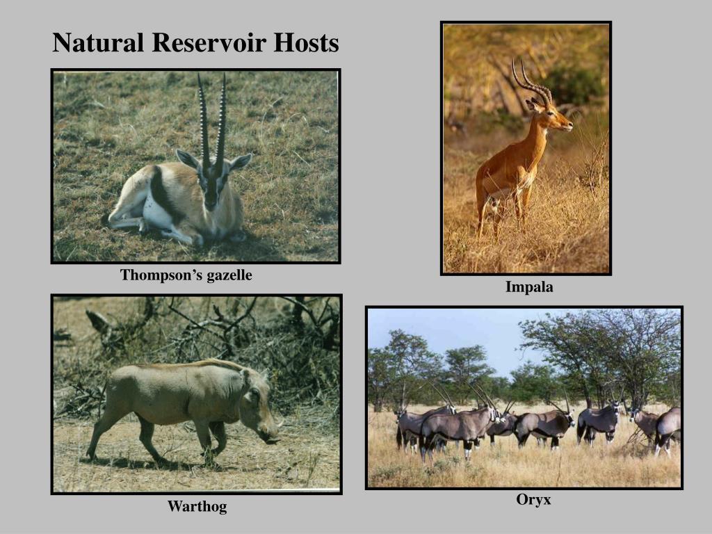 Natural Reservoir Hosts