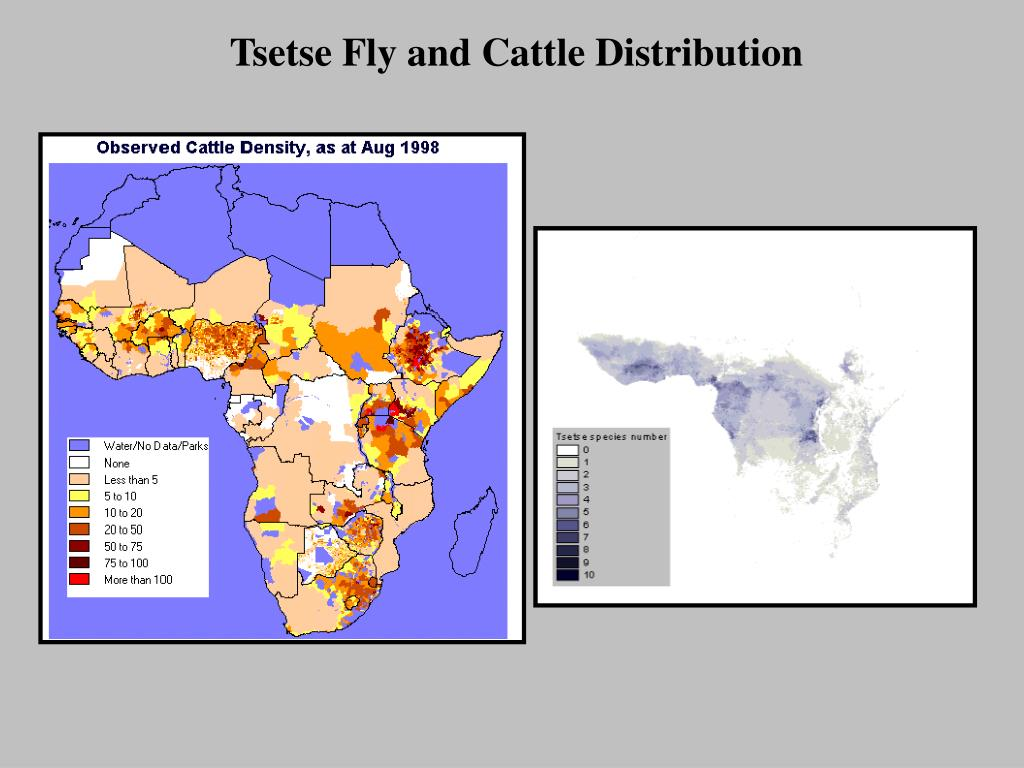 Tsetse Fly and Cattle Distribution
