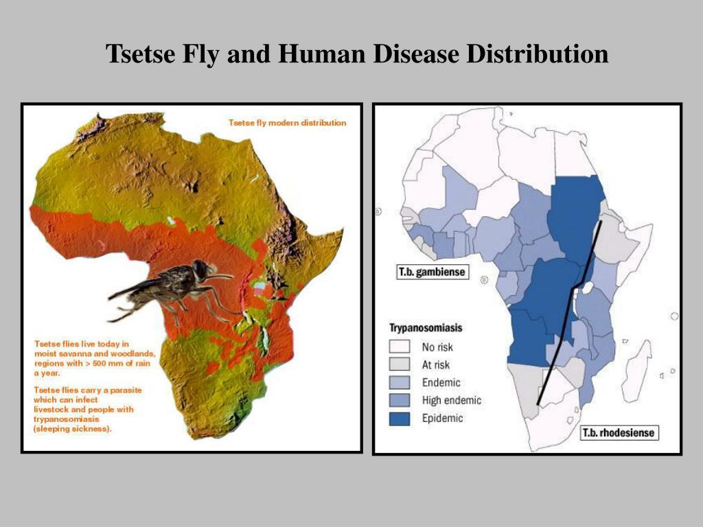 Tsetse Fly and Human Disease Distribution