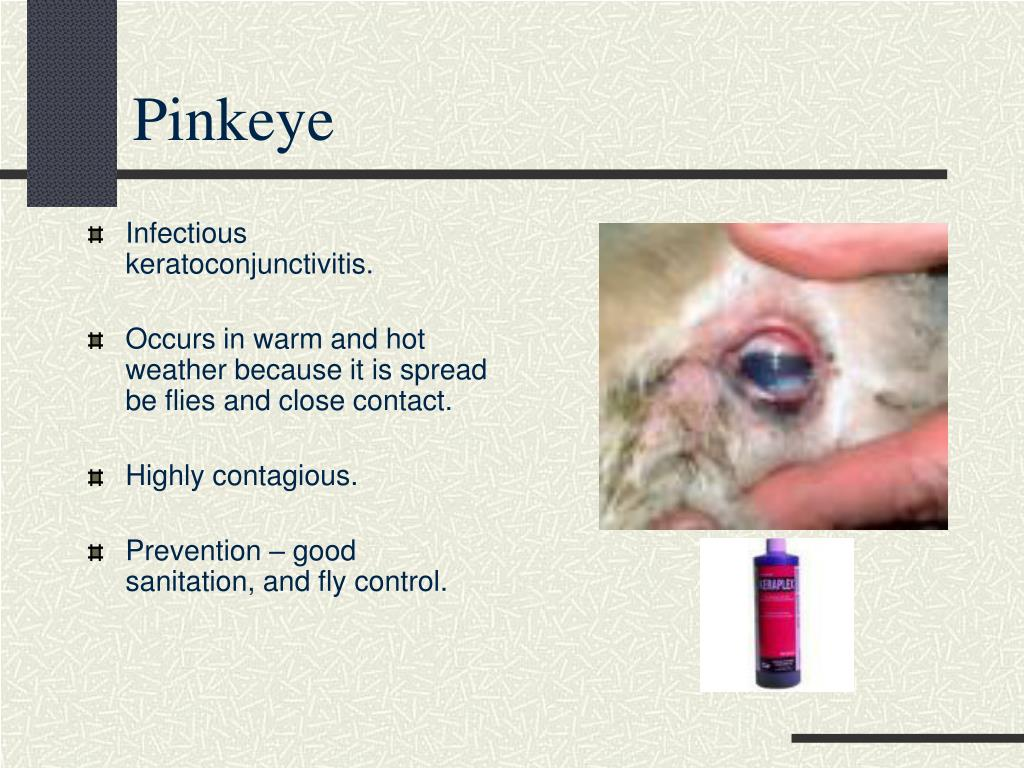 PPT - Common Goat Diseases Signs, Prevention, and ...