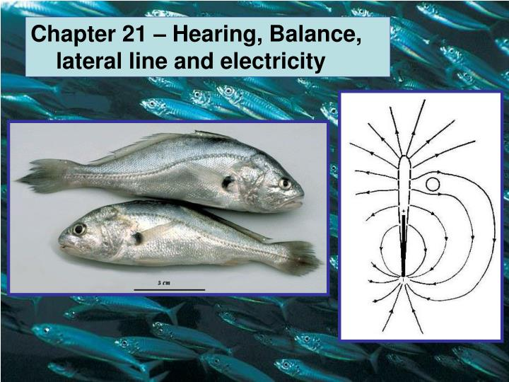 Chapter 21 – Hearing, Balance, lateral line and electricity
