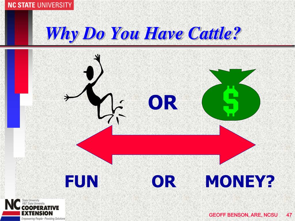 Why Do You Have Cattle?