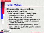 cattle options