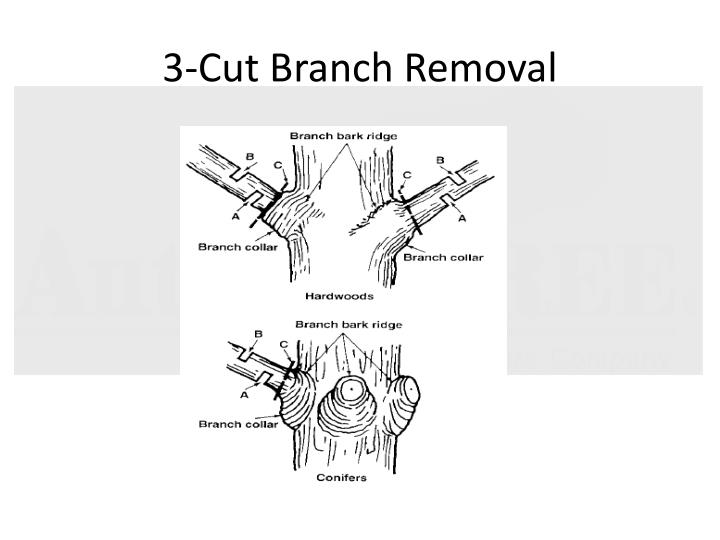 3-Cut Branch Removal
