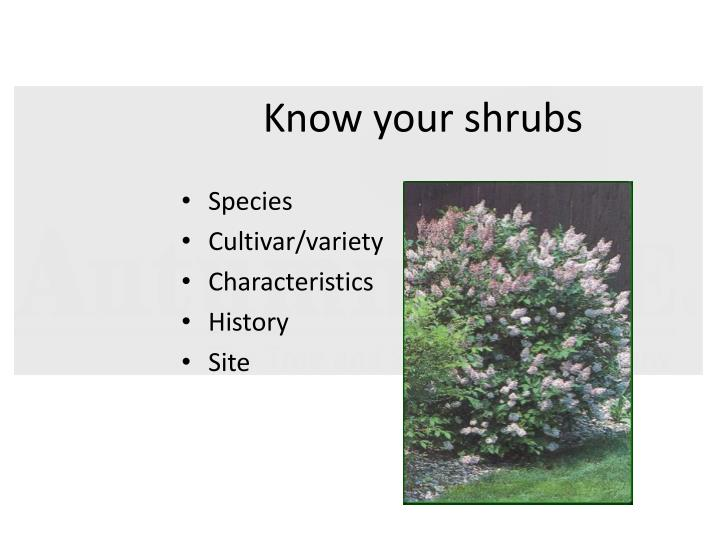 Know your shrubs