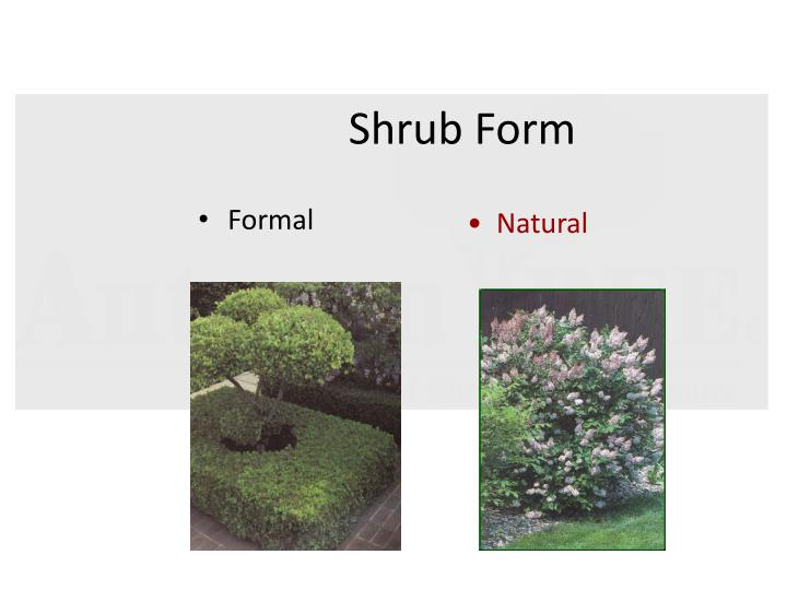 Shrub Form