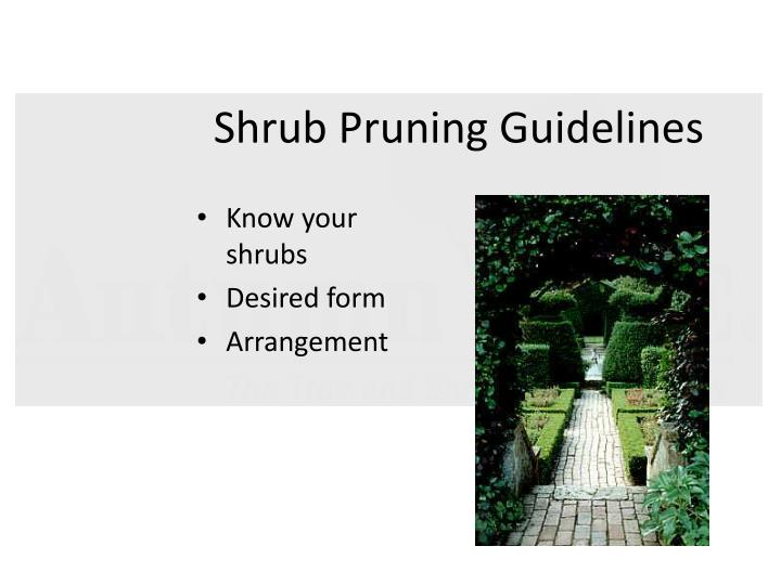 Shrub Pruning Guidelines