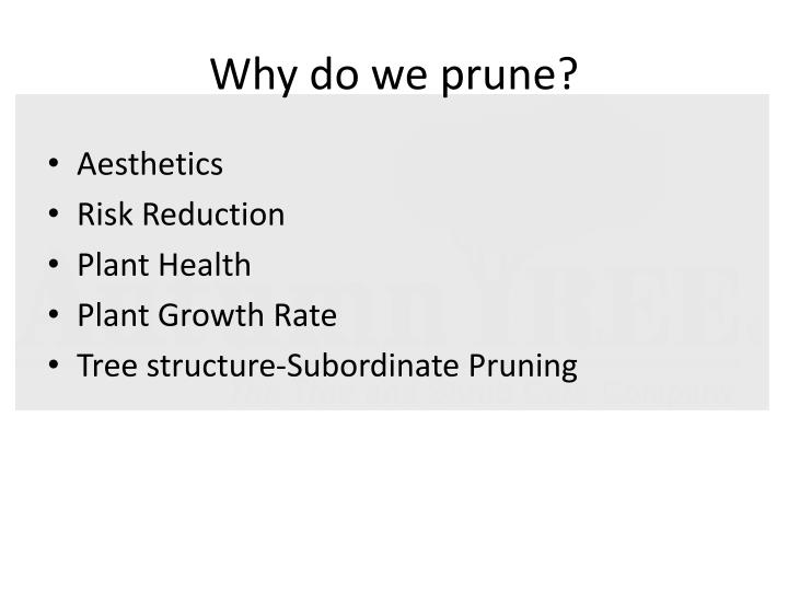 Why do we prune?