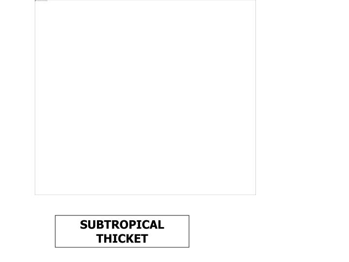 SUBTROPICAL THICKET