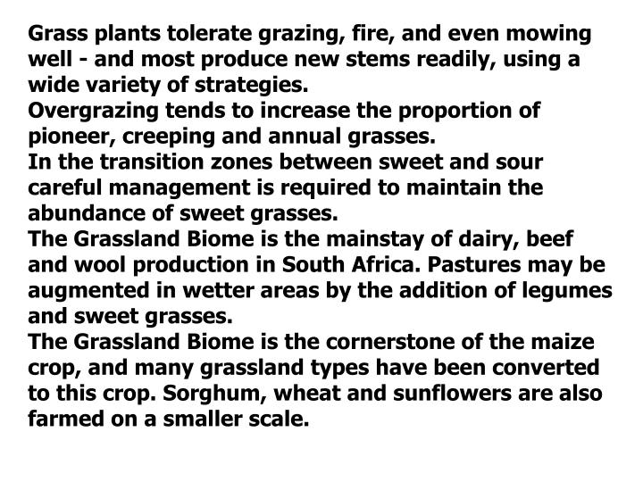 Grass plants tolerate grazing, fire, and even mowing well - and most produce new stems readily, using a wide variety of strategies.