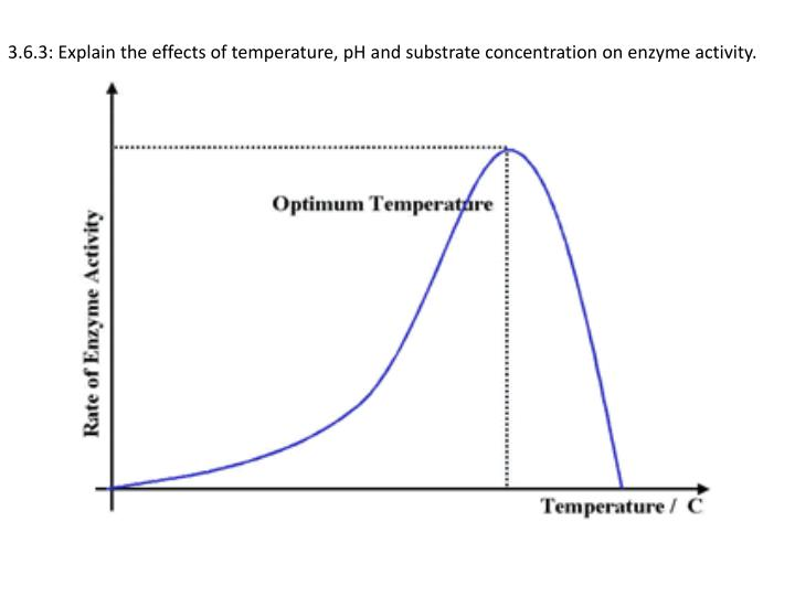 how does ph of intestine and temperature of the body affect enzyme activity The small intestine was removed alkaline phosphatase activity in 1 hour optimum activity was found to occur at ph 913 when the enzyme.