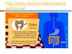 http kitses com animation swfs digestion swf5