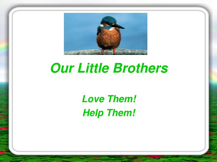 Our little brothers