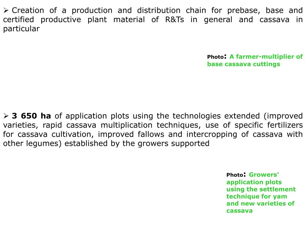 Creation of a production and distribution chain for prebase, base and certified productive plant material of R&Ts in general and cassava in particular