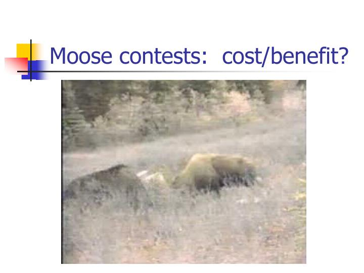 Moose contests cost benefit