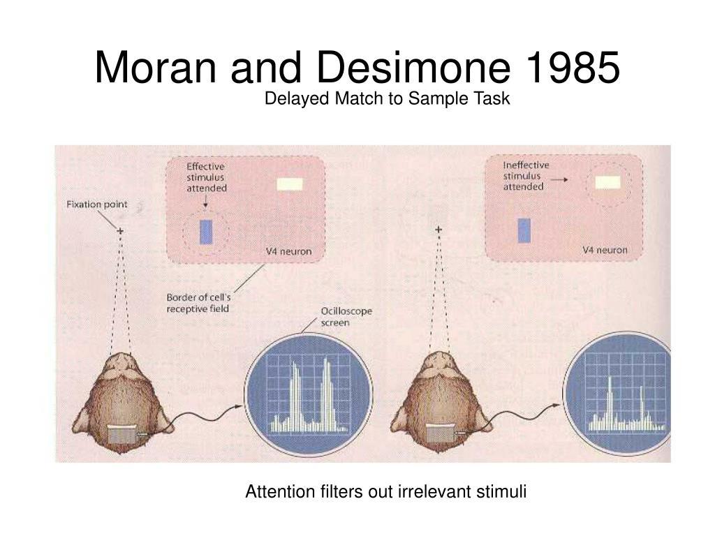 Moran and Desimone 1985