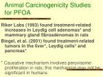 animal carcinogenicity studies for pfoa