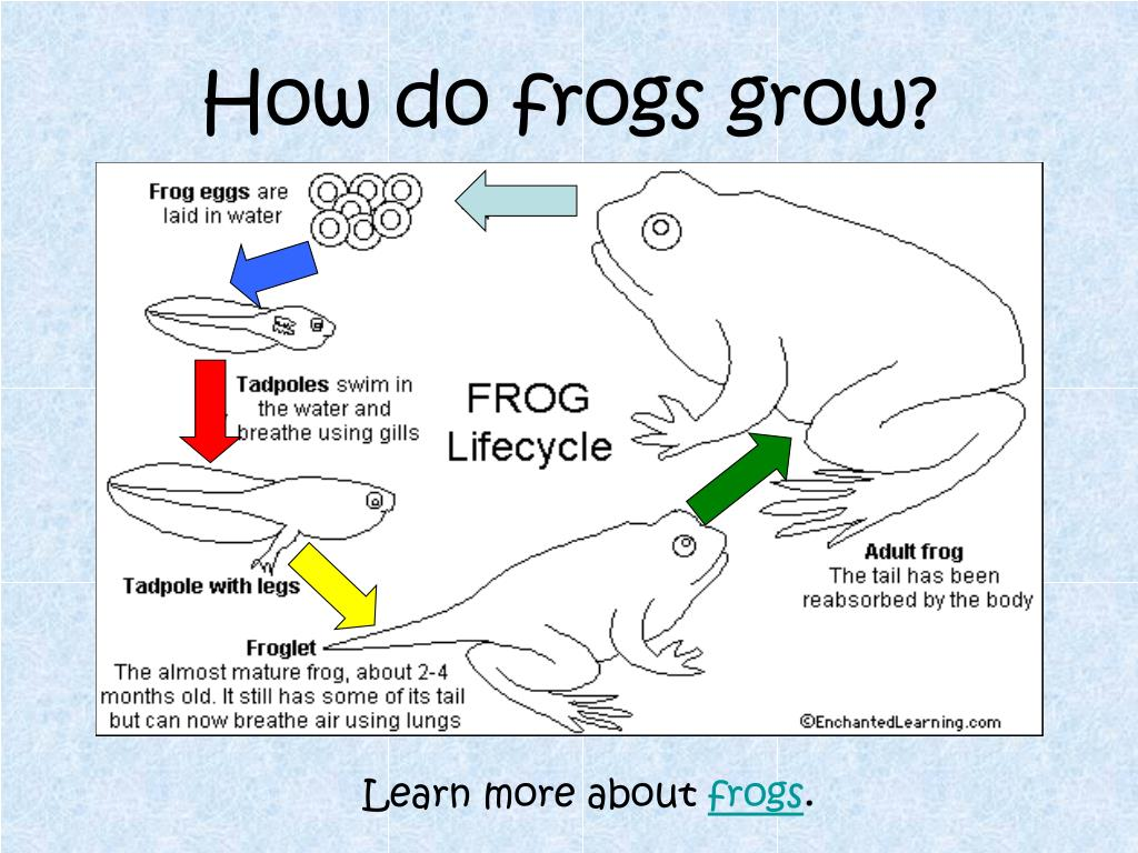 How do frogs grow?