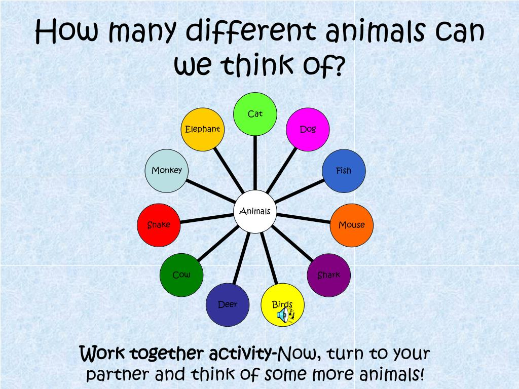 How many different animals can we think of?