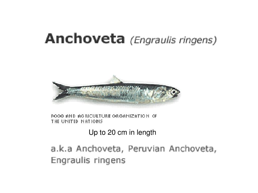 Up to 20 cm in length